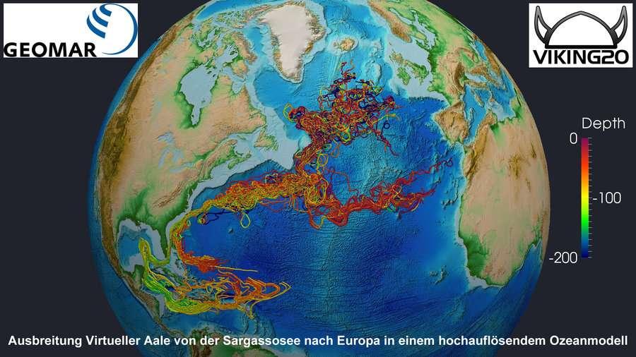 Trajets de migration virtuels des jeunes anguilles entre la mer des Sargasses et l'Europe calculés par un modèle océanique haute-résolution. Selon les conditions de vent et de courant, les larves suivent deux voies différentes. La plus longue traverse les Caraïbes, tandis que la deuxième passe directement de la mer des Sargasses au Gulf Stream. Les couleurs fournissent des informations sur la profondeur à laquelle les larves se trouvent en un lieu donné (voir échelle de couleur à droite de l'image). © Geomar