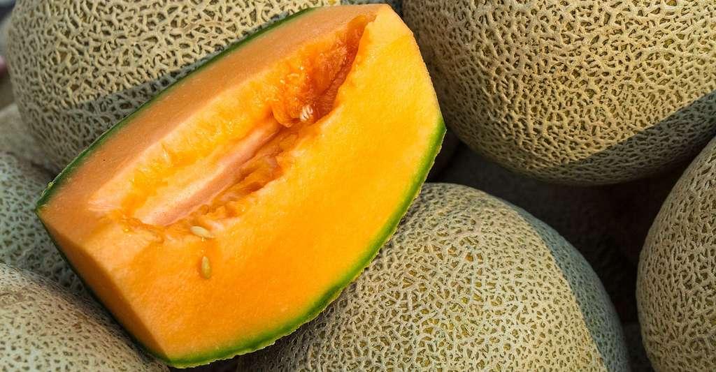 Pour faire des glaces ou des sorbets, le melon Cantaloup est idéal ; c'est le plus sucré. © Teri Virbickis, Shutterstock