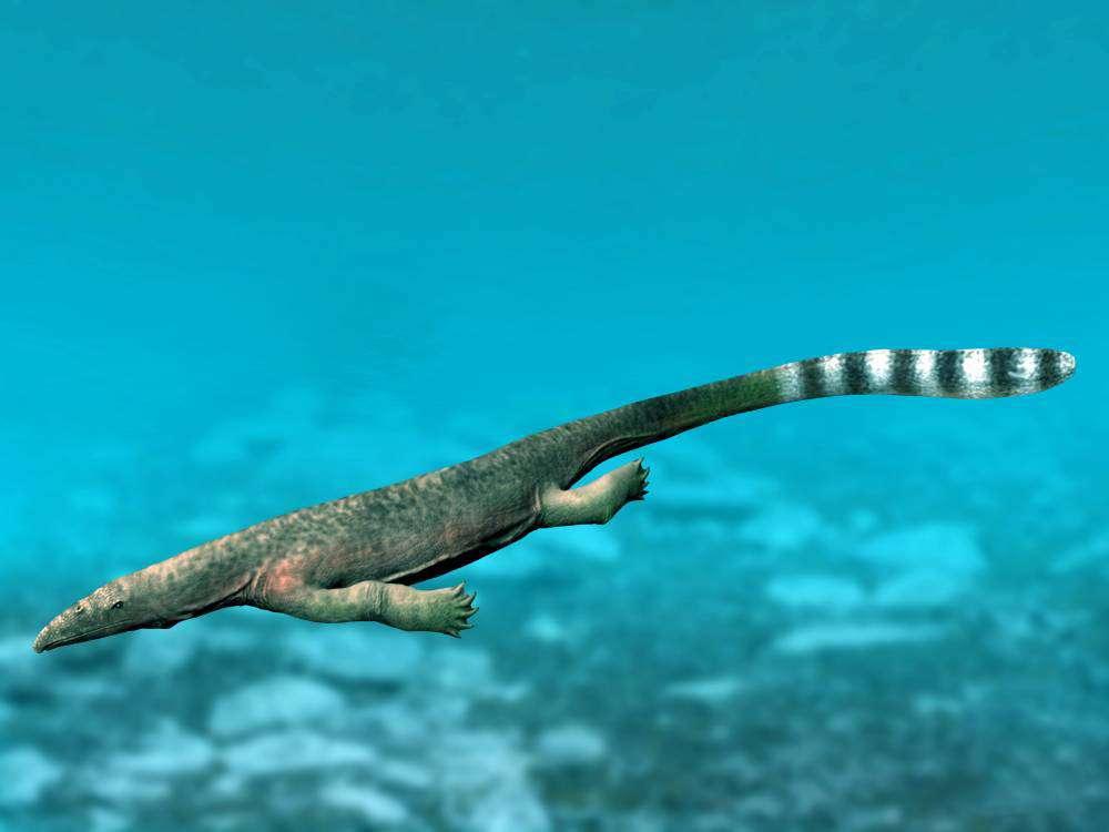 Une vue d'artiste d'un Thalattosaurus. © Nobu Tamura, CC by-sa 4.0