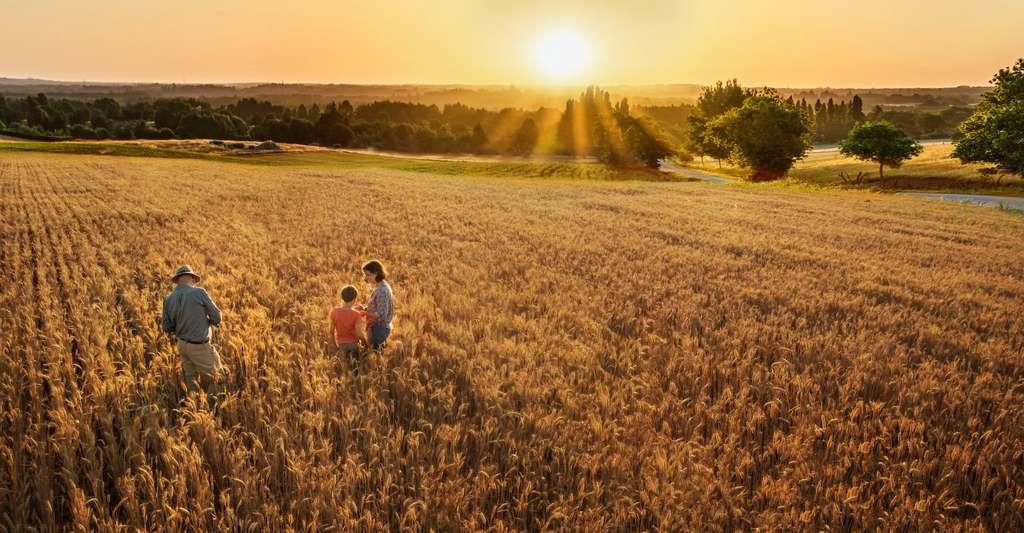 C'est en reconsidérant notamment notre rapport à la terre et à notre alimentation que nous sommes parvenus à limiter les émissions de gaz à effet de serre et avec elles, le réchauffement climatique. © jackfrog, Adobe Stock