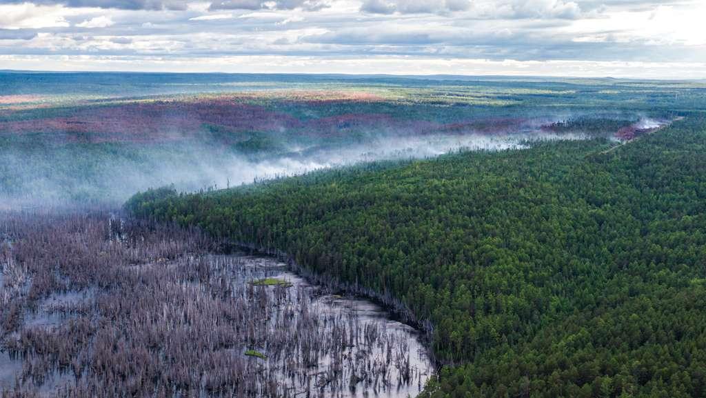 La destruction de la forêt pourrait accélérer la fonte du permafrost. © Greenpeace