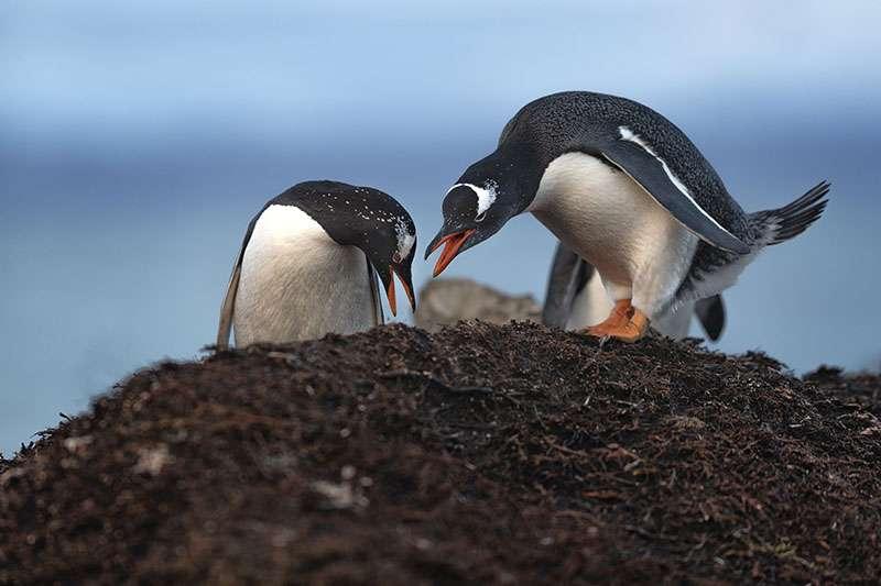 Discussions autour du nid. © Grégory Pol, tous droits réservés