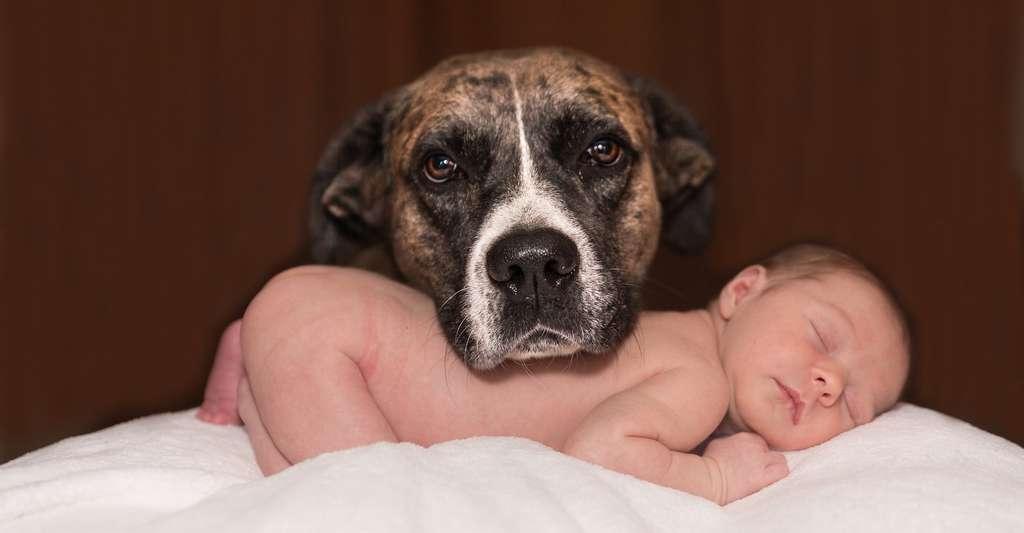 Avant d'accueillir un chien, il faut savoir que ceux-ci ont tendance à chercher en permanence des signes de votre affection. Si vous ne vous sentez pas capables de leur en donner, optez plutôt pour un autre animal de compagnie. © karenwarfel, Pixabay, DP