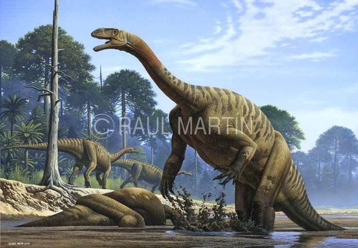 Le platéosaure, l'un des premiers herbivores géants
