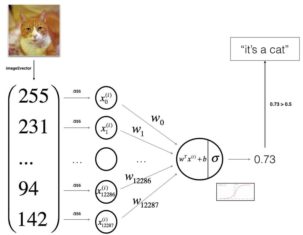Diagramme de classement des chats avec le deep learning. © Mashimo