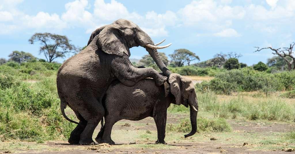 La plupart des espèces à reproduction sexuée ressentiraient ce qui ressemble à du plaisir lors de l'acte sexuel. © michelle, Fotolia