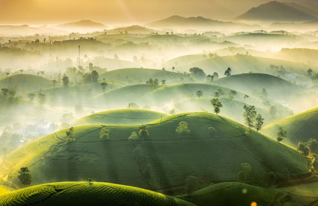 Tea Hills © Vu Trung Huan, Royal Meteorological Society
