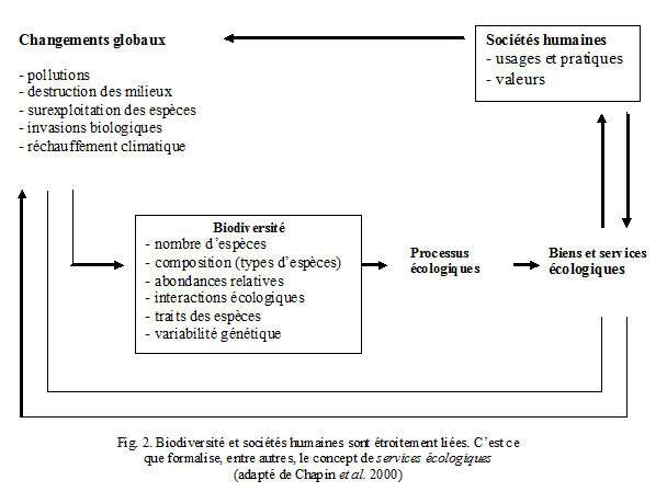 Figure 2. Les services écologiques démontrent le lien entre la biodiversité et les sociétés humaines. © DR