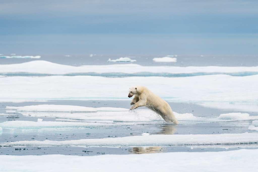 Le saut de l'ours
