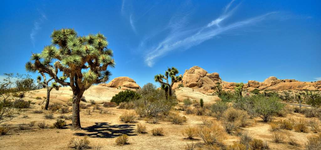 Joshua Tree National Park. © United States Air Force? CCO
