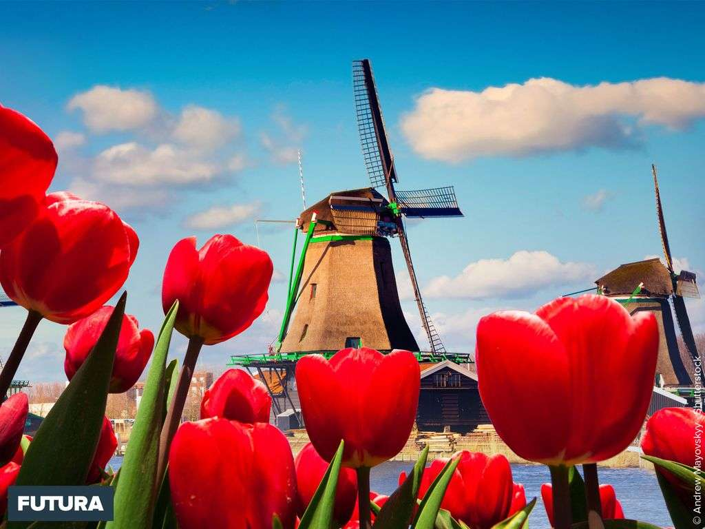 Printemps : Tulipes et moulin en Hollande