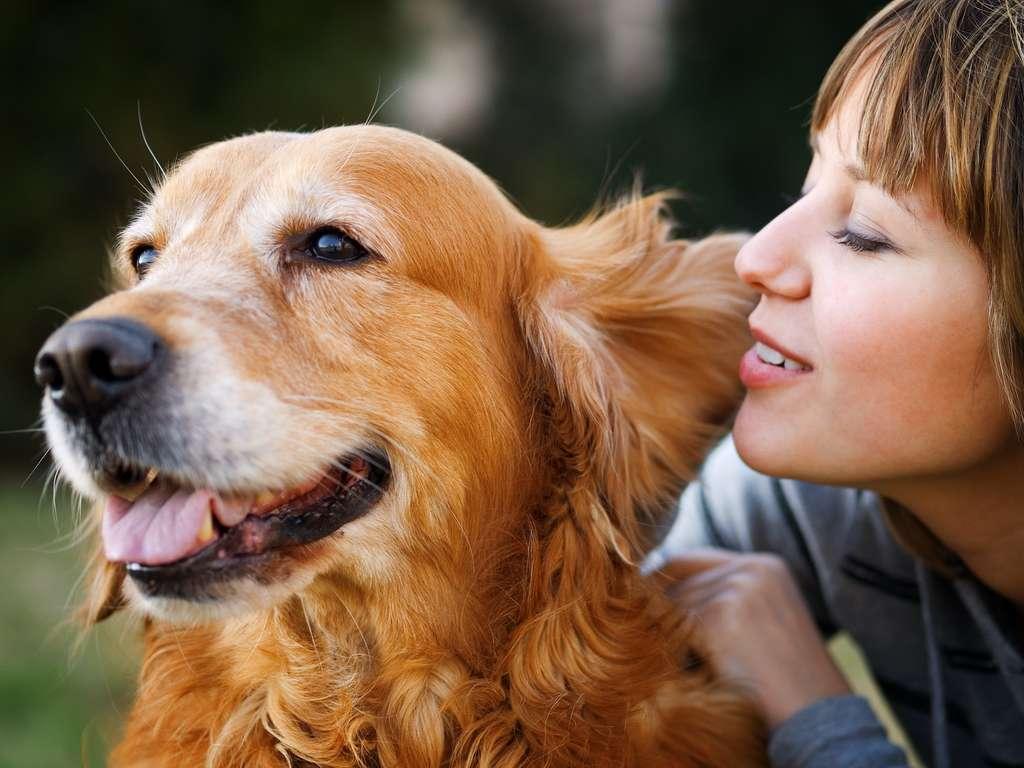 Votre chien distingue votre voix de celle d'un inconnu. © ivanmateev, Adobe Stock