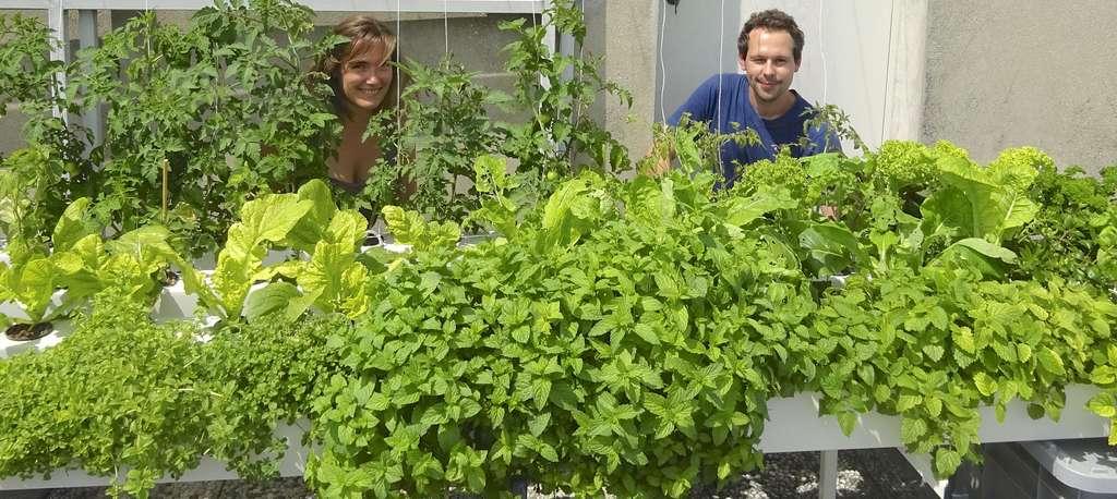 Louise Douillet et Michel Desportes derrière leurs premières plantes. Cette culture urbaine en terrasse n'est possible que sur certains toits, qui doivent respecter une liste de conditions règlementaires. L'une d'elles est qu'ils ne sont pas accessibles au public. © Aéromate