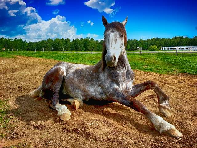 Le 18e cheval... © The Digital Artist, Pixabay, DP