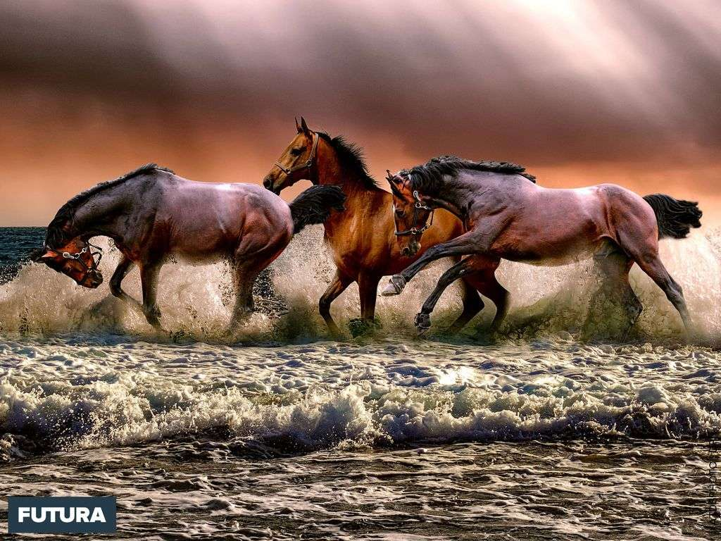 L'alliance du cheval et de l'homme a marqué l'humanité depuis des siècles