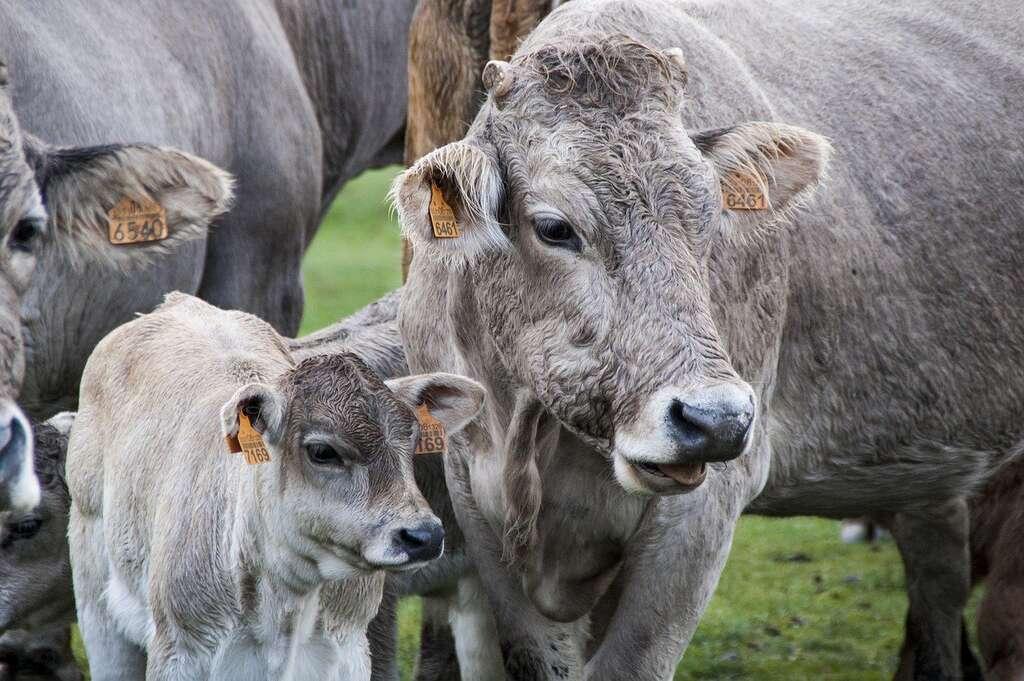 « La viande représente 50 % de l'empreinte sol d'un consommateur français moyen ». © Protocultura, Pixabay, FP