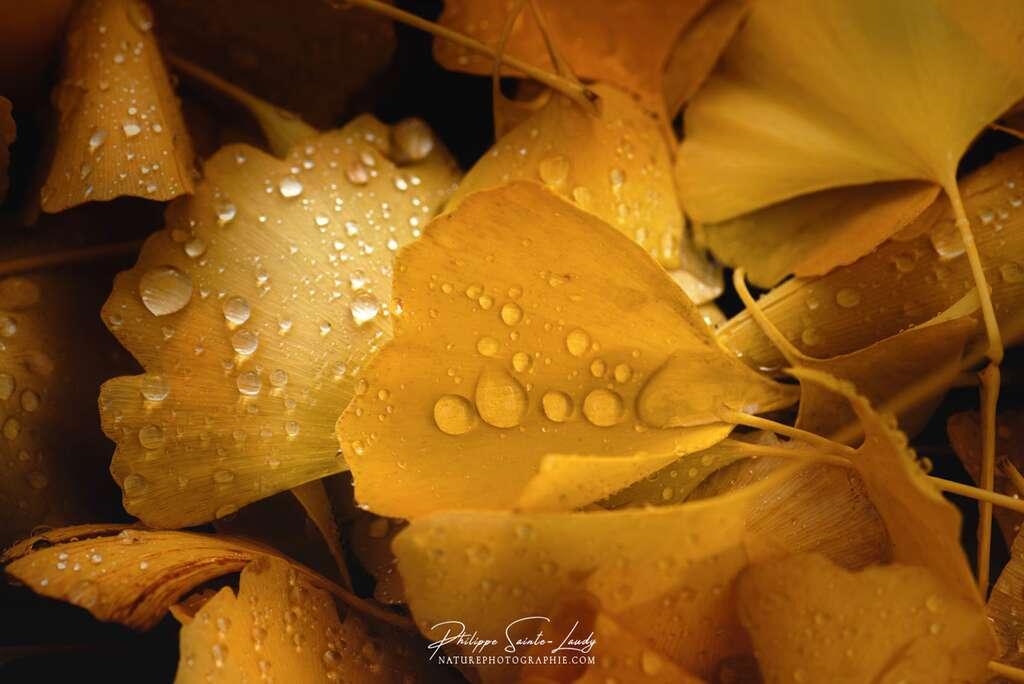 L'automne, couleur or