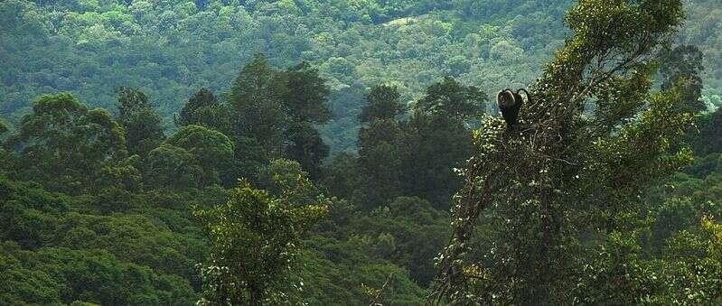 Habitat du macaque à queue de lion. © T. R. Shankar Raman, GNU FDL Version 1.2