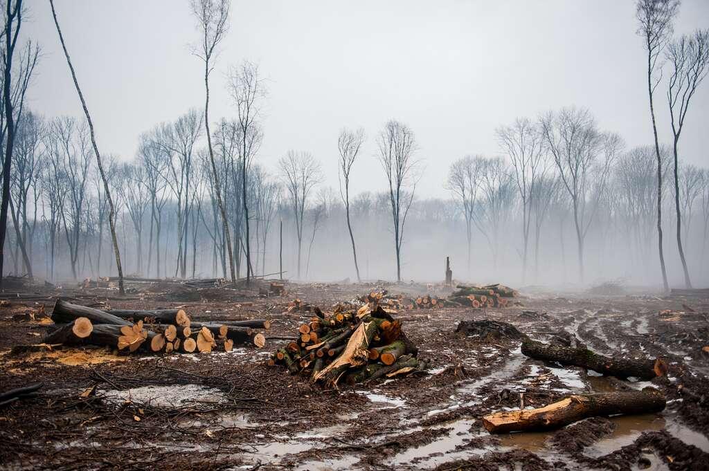 La déforestation menace la planète. © Aphotostudio, Adobe Stock