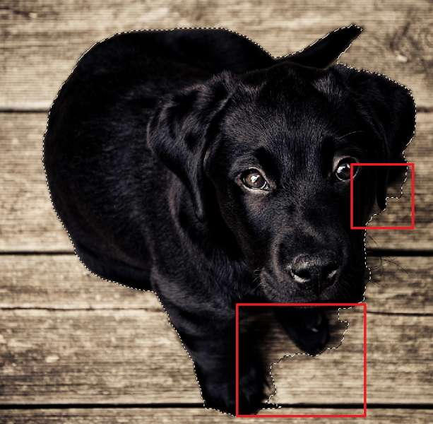 L'élément à détourer est sélectionné, mais les contours ne sont pas précis. © Adobe