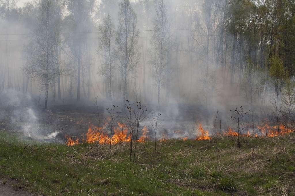 Les feux de friches et de résidus agricoles provoquaient une pollution massive déjà à l'époque des Romains. © Melena-Nsk, Fotolia