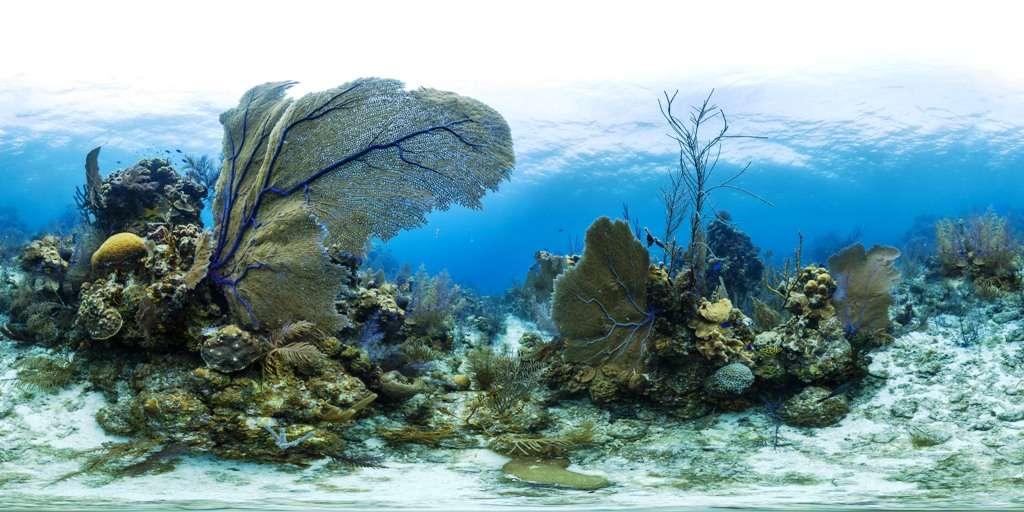 Lighthouse Reef est un petit atoll à 70 km du continent et de Belize City. Il est célèbre pour son Grand Trou bleu. Cette image donne la mesure de la beauté des récifs coralliens en ce lieu. © Catlin Seaview Survey
