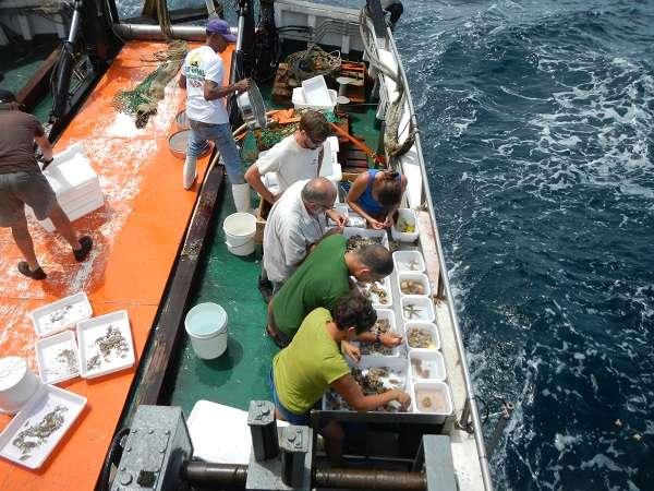 À bord de l'Hermano Gines, l'équipage procède à un premier tri des échantillons ramassés au chalut. © Gustav Paulay/Planète Revisitée en Guyane/MNHN/PNI