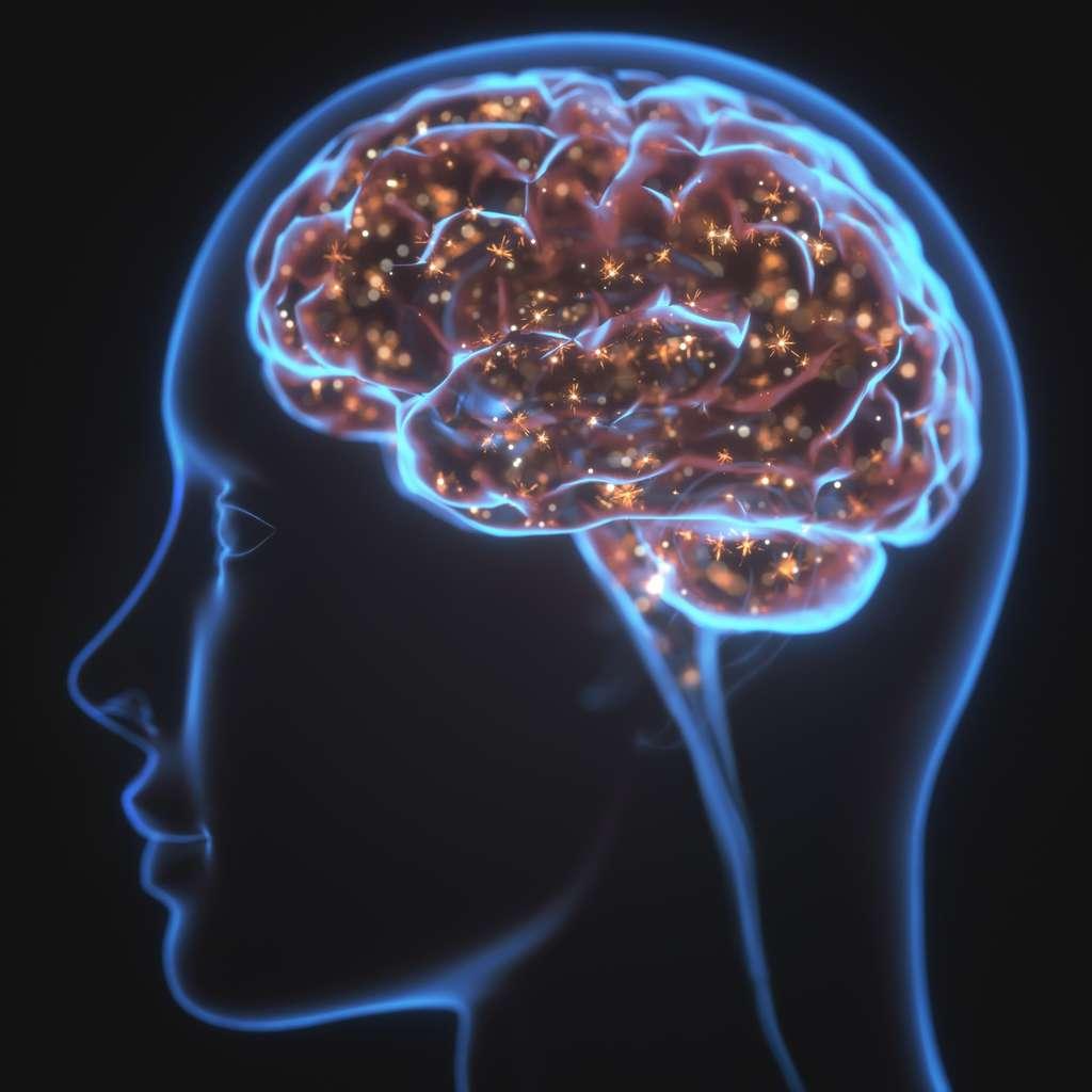 La barrière hémato-encéphalique sert à protéger le cerveau de certaines substances circulant dans le sang. Elle filtre et contrôle le passage des molécules pour les empêcher de passer du sang au liquide céphalo-rachidien.© ktsdesign, Fotolia