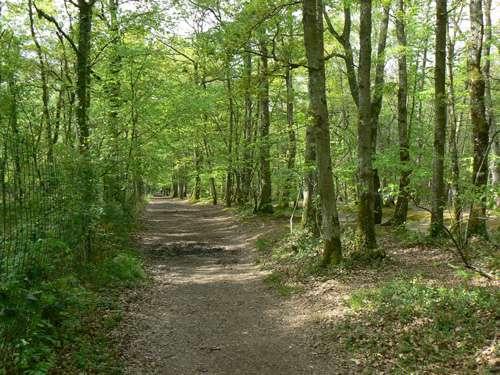 Forêt de Grimbosq. © Pradigue GNU FDL 1.2