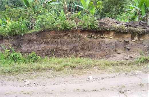 Fig. 23 : Vue de la coupe de terrain dans lequel s'insère la structure fouillée sur le site de La Florida, province de Zamora-Chinchipe (Sud de l'Equateur). © Jean Guffroy IRD