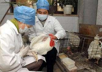 La vaccination des oiseaux est indispensable pour lutter contre les épizooties. © 2003 Xinhua News Agency