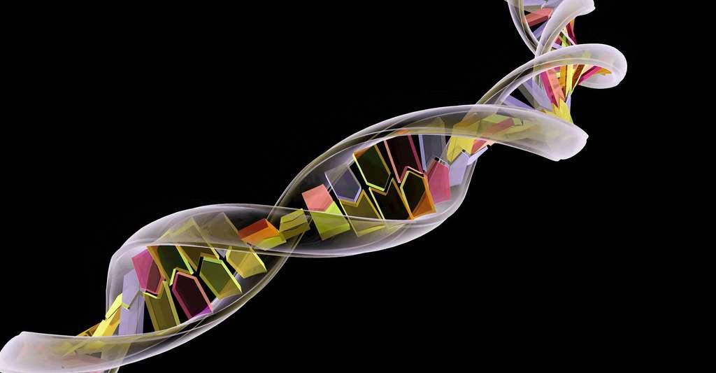Quand l'ADN devient ARN. © Naturegraphica Stock, Fotolia