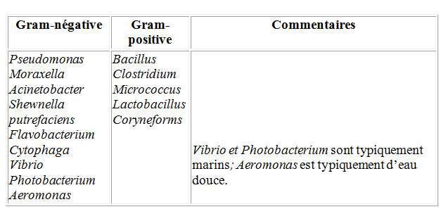 Bactéries d'eau douce et d'eau salée. © DR