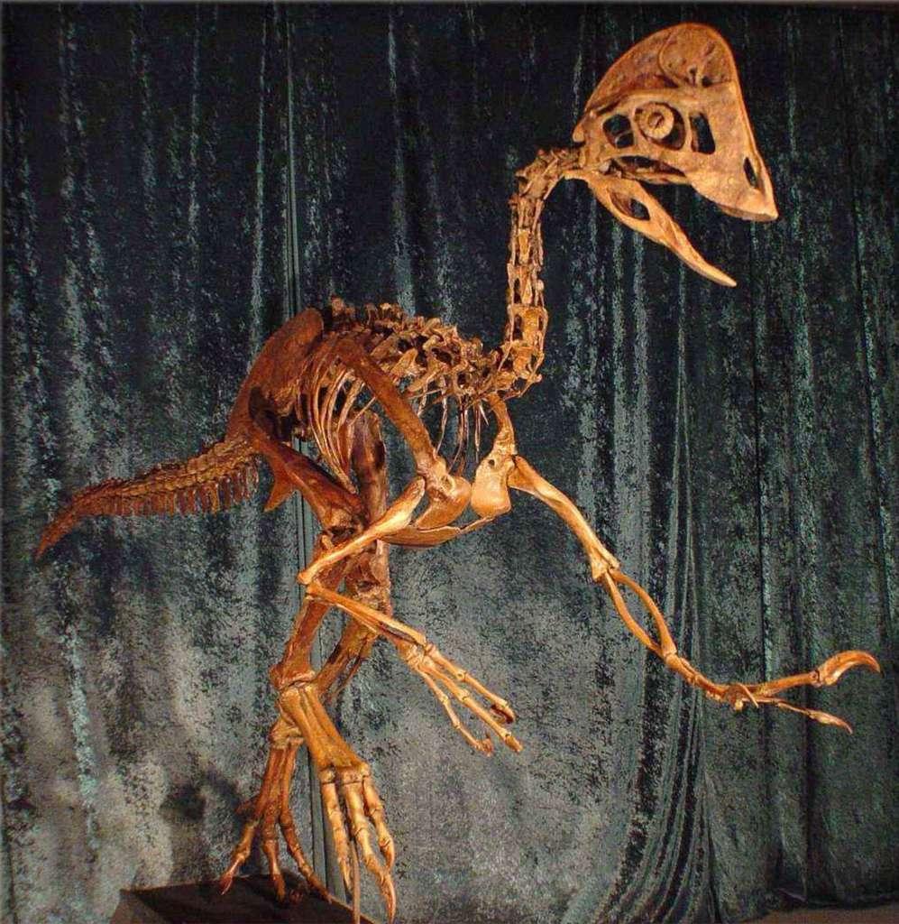 Deux des trois squelettes d'Anzu wyliei retrouvés portaient les marques de blessures osseuses au niveau d'une hanche et d'un orteil. © Musée d'histoire naturelle Carnegie