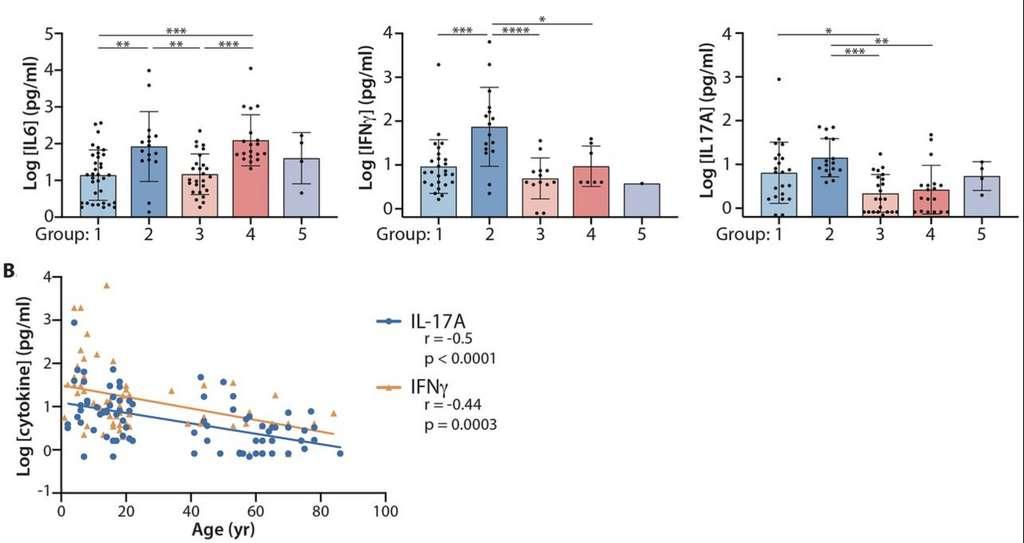 En haut, les diagrammes indiquent la production d'IL-6, d'IFN-ϒ et IL-17A. En bas, la courbe de la production de cytokine en fonction de l'âge. © Carl A. Pierce et al. Science Translational Medecine