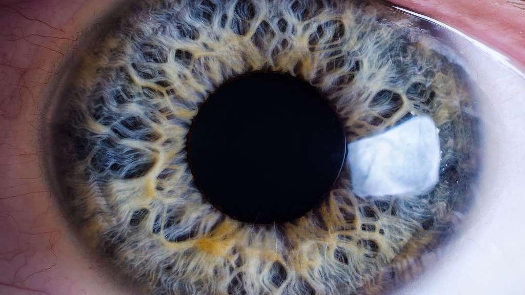 L'iris, la partie colorée de l'œil