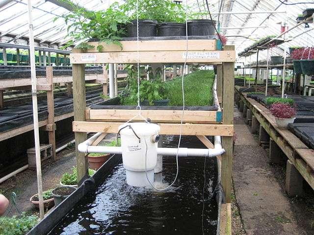 Un exemple de système aquaponique qui implique des tilapias (jusqu'à 10.000 poissons dans le réservoir de 5 mètres de profondeur), du cresson et des tomates. © Ryan Griffis, Wikimedia Commons, cc ba sa 2.0