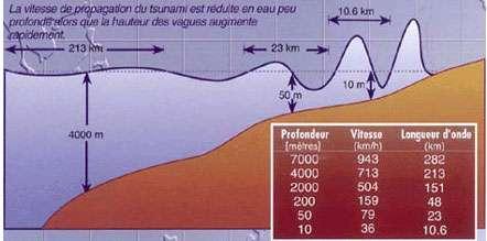 En eau profonde, un tsunami atteint en général quelques dizaines de centimètres de hauteur en surface, mais la hauteur de ses vagues augmente rapidement en eau peu profonde. L'énergie de la vague du tsunami va de la surface au fond de la mer, même dans les eaux les plus profondes. Quand le tsunami attaque le bord de mer, l'énergie de la vague est comprimée sur une distance beaucoup plus corte et sur une profondeur beaucoup plus faible, ce qui engendre des vagues meurtrières et destructives.