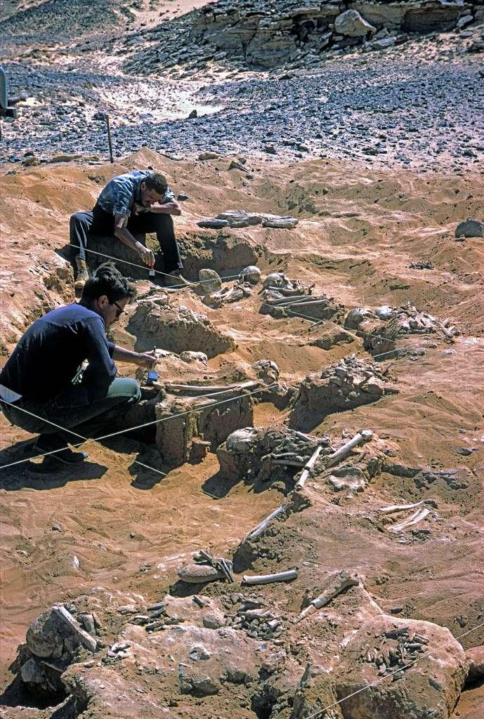 Le cimetière de Jebel Sahaba. © Fond d'Archives Wendorf du British Museum