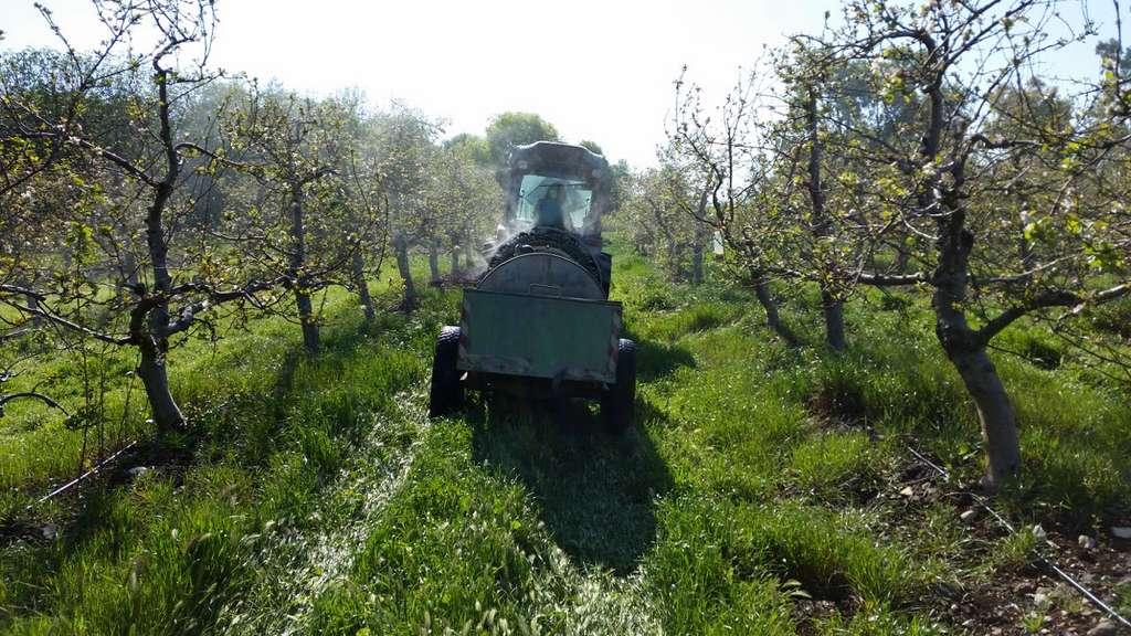 Les phéromones sont pulvérisées sous forme de « lait » comme un insecticide classique dans les vergers. Ici, une phéromone destinée à éliminer la carpocapse des pommes (Cydia pomonella). © M2i