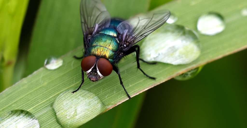 Découvrir l'anatomie de la mouche. © Don Burkett, Flickr, CC by-nc 2.0