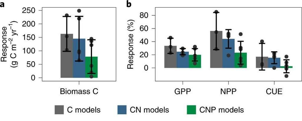 Le premier graphique montre la croissance de la biomasse en simulant un taux de CO2 plus important. Si l'on voit une belle augmentation avec les modèles informatiques ne prenant en compte que le carbone (en gris) et carbone avec l'azote (en bleu), l'augmentation est deux fois plus faible pour le modèle prenant en compte le carbone, l'azote et le phosphore (en vert). Le deuxième graphique montre la croissance de la forêt (GGP) et sa productivité (NNP) durant la première année de la simulation. Le diagramme CUE correspond au ratio des deux. On voit que l'apport limité de phosphore (en vert) réduit drastiquement la croissance et l'activité de la forêt. © Katrin Fleischer et al.