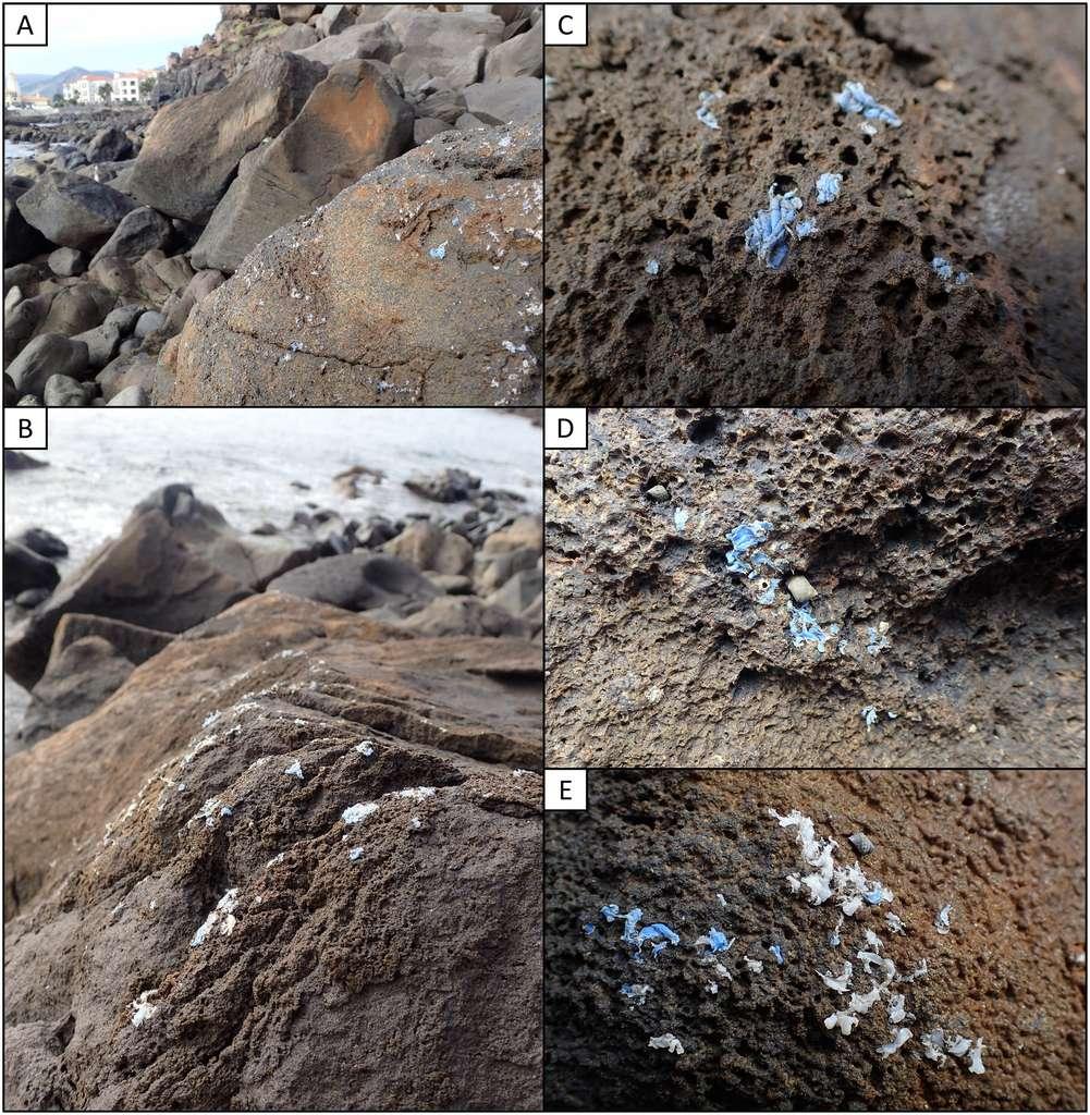 Le plasticroûte recouvre désormais 10 % de la surface des roches du littoral à Madère. © Ignacio Gestoso et al., Science of The Total Environment, 2019