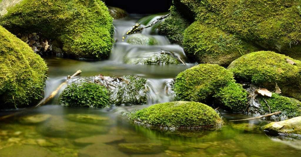 Bien-être et santé par la nature. Rien de tel que le son relaxant d'une cascade. © Marina del Castell, CC by-nc 2.0
