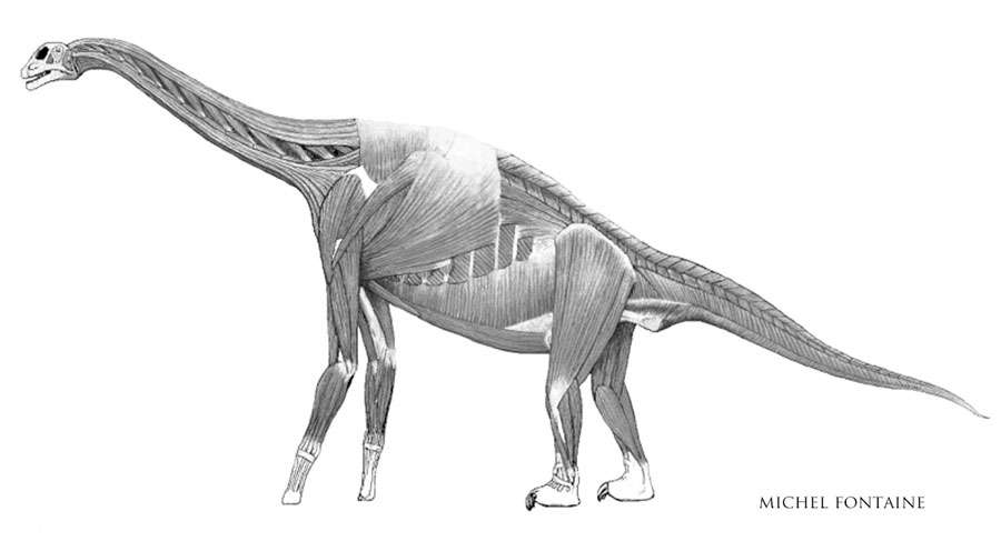 Atlasaurus muscles