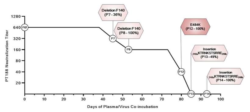 Les mutations successives neutralisent les anticorps en moins de 90 jours. © Rino Rappuoli et al., bioXriv, 2021