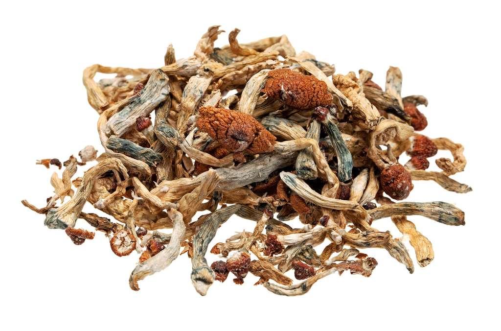 La psilocybine contenue dans certains champignons hallucinogènes montre des résultats prometteurs chez certains patients souffrant de dépression majeure. © robtek, Fotolia