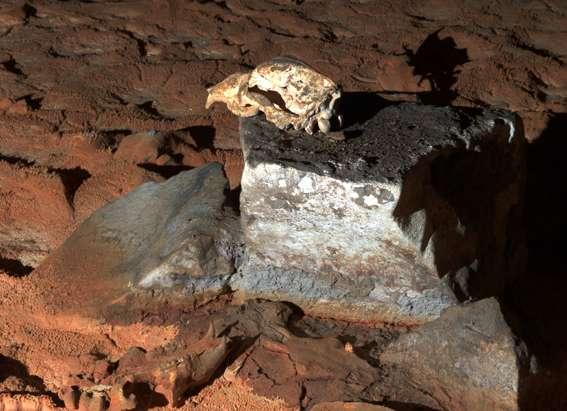 Salle du crâne. On y voit un crâne d'ours des cavernes posé sur une pierre plate. Des crânes d'ours jonchent le sol. © Jean Clottes, DR