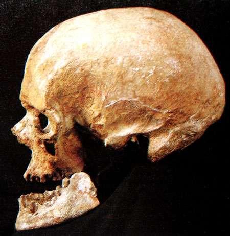 Crâne humain entier. © DR