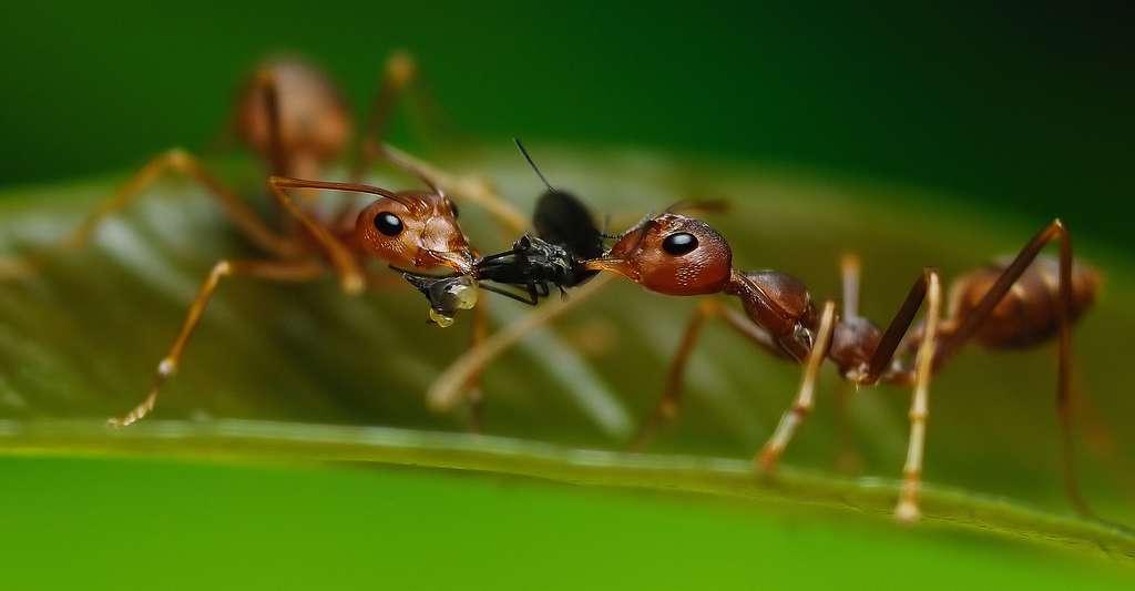 Le monde fascinant des fourmis. © Menang Rizalis Ent. - CC BY-NC 2.0